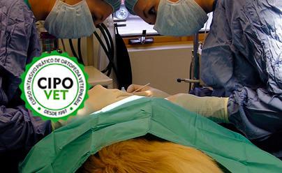 Curso Intensivo Prático de Ortopedia - Avançado | 01/07/2021